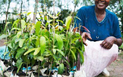 Tillsammans bidragit med 14 000 träd hos Vi-skogen